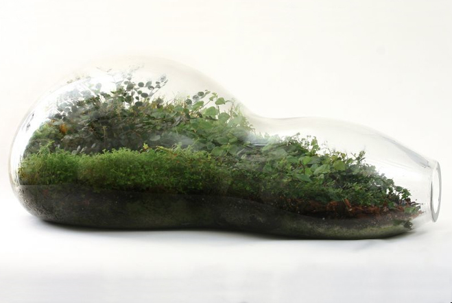 Giant-and-Living-Terrariums-by-Paula-Hayes-6