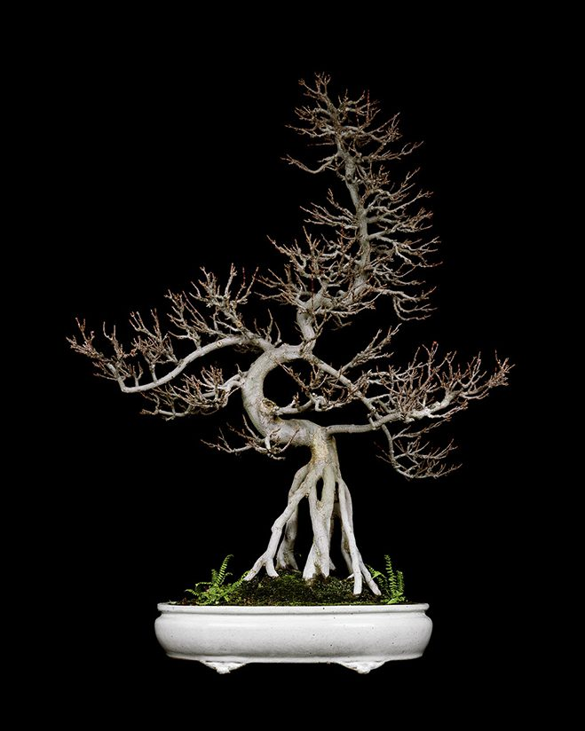 The-Bonsai-Project-by-KnibbelerWetzer-7
